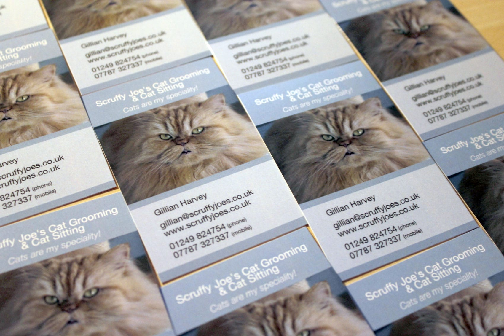 business-cards-for-scruffy-joes-cat-grooming-cat-sitting.jpg